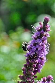 The Purple Flower and The Bumble Bee via Etsy