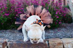 Halloween Dog Tutu: ORANGE & BLACK Dog Tutu by EllieGraceCrafts
