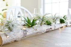 birch-log-centerpiece-with-air-plants-and-succulents