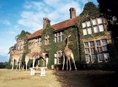Giraffe Manor in Kenya...