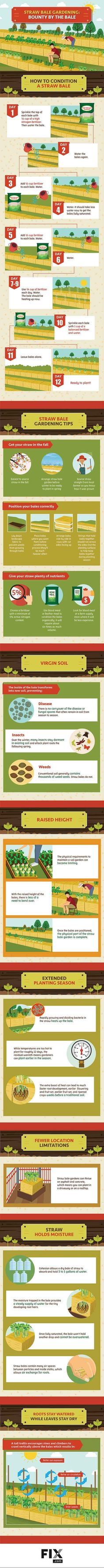 Infographic | Straw Bale Garden Tips