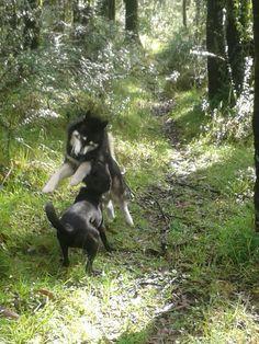 Jugando en el bosque
