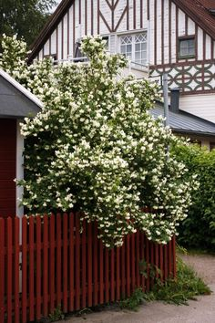 House Front, Hedges, Garden Inspiration, Plank, Garden Plants, Garden Design, Backyard, Outdoor Structures, Landscape