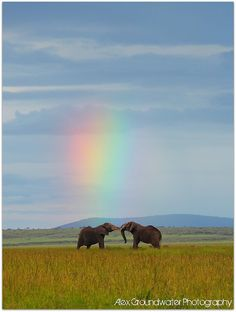 Find images and videos about nature, sky and animal on We Heart It - the app to get lost in what you love. Photo Elephant, Elephant Love, Beautiful Creatures, Animals Beautiful, Mother Earth, Mother Nature, Animals And Pets, Cute Animals, All About Elephants