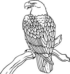 Bald Eagle coloring printable
