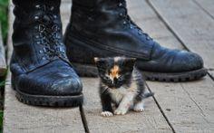 35PHOTO - Александр Круль - Необычная семейка...