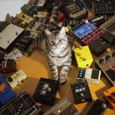 "rurinacci:    shoegaze cat!    Brilliant    Shoegaze cat says: ""Mai band iz moar obzkur den urs. Lawlz."" ""I can has jzmstr?"""