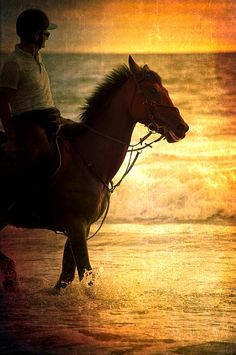 Sunset Horse © Loriental Photography - Prints available for sale in my European and US online shops (Europe : http://www.artflakes.com/en/shop/loriental-photography - USA : http://fineartamerica.com/profiles/loriental-photography.html)