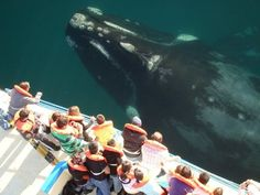 Whale Watching, San Diego, California - Love the proportions in this image