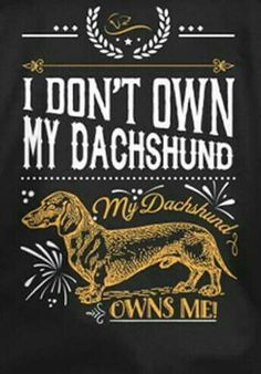 """I don't own my dachshund. My dachshund owns me."" Truth about these funny and amazing loyal dogs #dachshund"