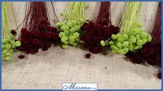 *Nuevos colores de Semillas Aterciopeladas*  ¡¡Ya en nuestra web!! http://masario.es/es/familia.aspx?pagina=1