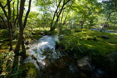 hogonin temple. Garden Landscape Design, Garden Landscaping, Kyoto, Temple, Buildings, Waterfall, Gardens, Spaces, Outdoor