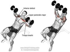 Incline dumbbell bench press. Targets your Clavicular (Upper) Pectoralis Major, while your Anterior Deltoid and Triceps Brachii act as synergists. #benchpressweighttraining