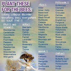 Bees. Plants, trees &  flowers.