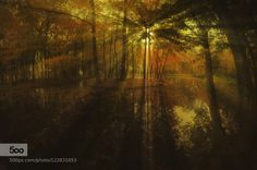 by teidseid #nature