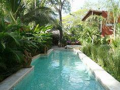 photos of tropical gardens -