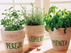 Mini garden with edible herbs in your kitchen is a fabulous way to save money on food and decorating Herb Garden, Garden Pots, Vegetable Garden, Diy Horta, Planter Menthe, Container Gardening, Gardening Tips, Bougainvillea, Growing Herbs