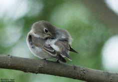 Tiny Bird, Birds, Photography, Animals, Photograph, Animales, Animaux, Fotografie, Bird