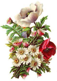 Scraps - Victorian Die Cut - Victorian Scrap - Tube Victorienne - Glansbilleder - Plaatjes: Bouquet