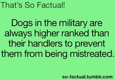 Dogs in the military are always higher ranked than their handlers to prevent them from being mistreated