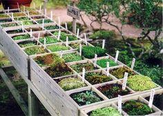 I totally want a moss garden. Raised Garden, Diy Garden, Plants, Garden, Urban Garden, Outdoor Gardens, Farm Gardens, Growing Moss, Garden Landscaping