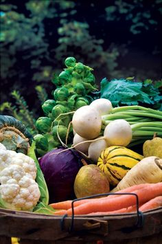 Your Best Fall Garden Vegetables Grow Your Best Autumn Garden: What, When and How Here's expert advice for the fall gardening season.Grow Your Best Autumn Garden: What, When and How Here's expert advice for the fall gardening season. Fall Vegetables, Planting Vegetables, Vegetable Gardening, Vegetable Bin, Magic Garden, Dream Garden, Fruit And Veg, Fruits And Vegetables, Colorful Vegetables