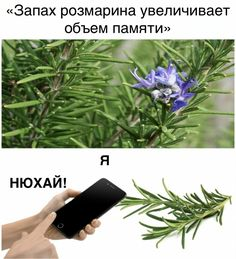 Russian Jokes, Wit And Wisdom, Memes, Lol, Funny, Humor, Laughing So Hard, Wtf Funny, Hilarious