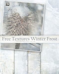 Free textures Winter Frost by Mephotos on DeviantArt