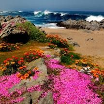 The Beach Flowers at Isla Negra, in Chile