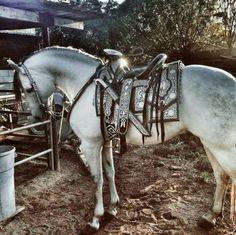 Beautiful saddle and grey horse! This horse is so pretty he almost looks not real!