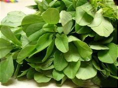 Já ouviu falar no chá de feno grego? Descubra os benefícios dessa erva e como utilizá-la corretamente.