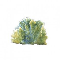 Lettuce Coral – Large #392 $27.45 SHOP NOW at LivingColor.com Available in Aqua and Light Green. Dimensions: 8″ x 4″ x 6.5″