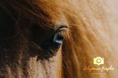 Camilla Rahbech, hestefotograf, danmark, sønderjylland, sønderborg, fotograf, heste, unico, ridecenter