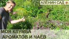 Моя КЛУМБА с ПРЯНЫМИ травами или Аптекарский огород // My sample of herb...
