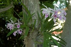 orchids growing on rocks - Google Search