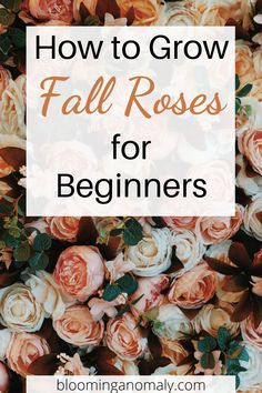 If you live in a mild climate area such as Southern California, you can enjoy growing roses through the fall season. Pick roses in red and oranges to match up with the rest of your fall decor. Click on the pin to learn more about how to grow fall roses for beginners.