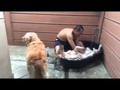 Watch This Dog Enjoy A Home Spa Will Make You Want To Be A Dog