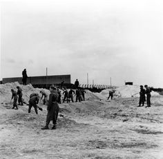 Bergen Belsen death camp, Germany, SS soldiers forced to dig a mass grave for the burial of the dead under British supervision, after the liberation, April 1945.