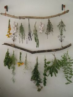 tulullabelle—drying pretty herbs:
