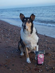 Smooth Collie, Fat, Treats, Stars, Dogs, Animals, Sweet Like Candy, Goodies, Animales