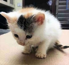 MISSIE – A1111823 Safe - 5-13-2017 Manhattan MISSIE A1111823 4 WEEKS OLD – NEEDS IMMEDIATE MEDICAL CARE Super Urgent Shelter Cats These animals are either high risk, injured or have previously appeared on the To Be Destroyed list and survived. They are in danger of being on the list again or destroyed without any further notice.