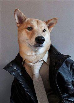 男裝柴犬狗