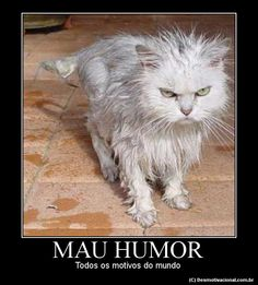 Photo: This Photo was uploaded by brother-euse. Find other Angry Cat. pictures and photos or upload your own with Photobucket free image and . Funny Cats, Funny Animals, Cute Animals, Crazy Cat Lady, Crazy Cats, Cool Cats, Mau Humor, Mouille, Scary Cat