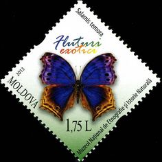 Moldova Postage Stamps (Commemorative) 2013 № 840   Salamis / Protogoniomorpha Temora (Blue Mother-of-Peal Butterfly)   Issue: Butterflies and Moths (III)