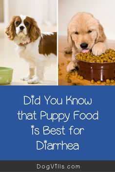 What puppy food is best for diarrhea?That question is far more common than you might think, especially considering the fact that puppies have sensitive tummies! Best Dog Food, Best Dogs, Puppy Food, Dog Food Recipes, Puppies, This Or That Questions, Pets, Animals, Cubs
