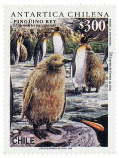Stamps showing King Penguin Aptenodytes patagonicus, with distribution map showing range Antartica Chilena, King Penguin, Argentine, Wild Creatures, Vintage Stamps, Animals Images, Stamp Collecting, Science And Nature, Pet Birds