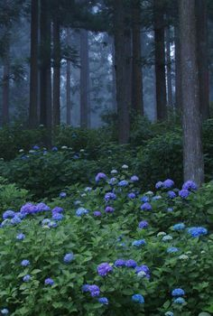 misty hydrangea forest - Photography by echinocactus Mystical Forest, Forest Photography, Flower Photography, Nature Aesthetic, Belle Photo, Pretty Pictures, Beautiful Landscapes, Mother Nature, Wild Flowers