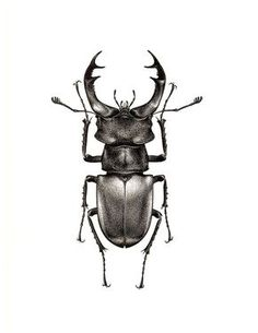 Lucanus cervus Lucanus cervus You are in the right place about Mammals notes Here we offer Beetle Tattoo, Bug Tattoo, Hirsch Tattoo, Stippling Art, Bild Tattoos, Insect Art, Insect Crafts, Bugs And Insects, Tattoo Sketches
