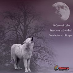 Lobo Aullando en la Noche