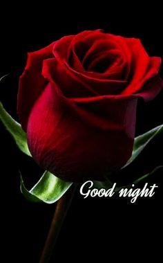 Good Night Images For Whatsapp Beautiful Good Night Images, Romantic Good Night, Cute Good Night, Good Night Gif, Good Night Messages, Good Night Sweet Dreams, Good Night Flowers, Good Morning Roses, New Good Night Images